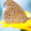 Аватар для Emik